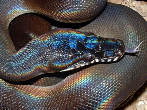 2013 ~ Year of the Water Snake (5/6)