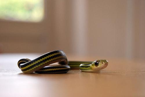 a cuty snake