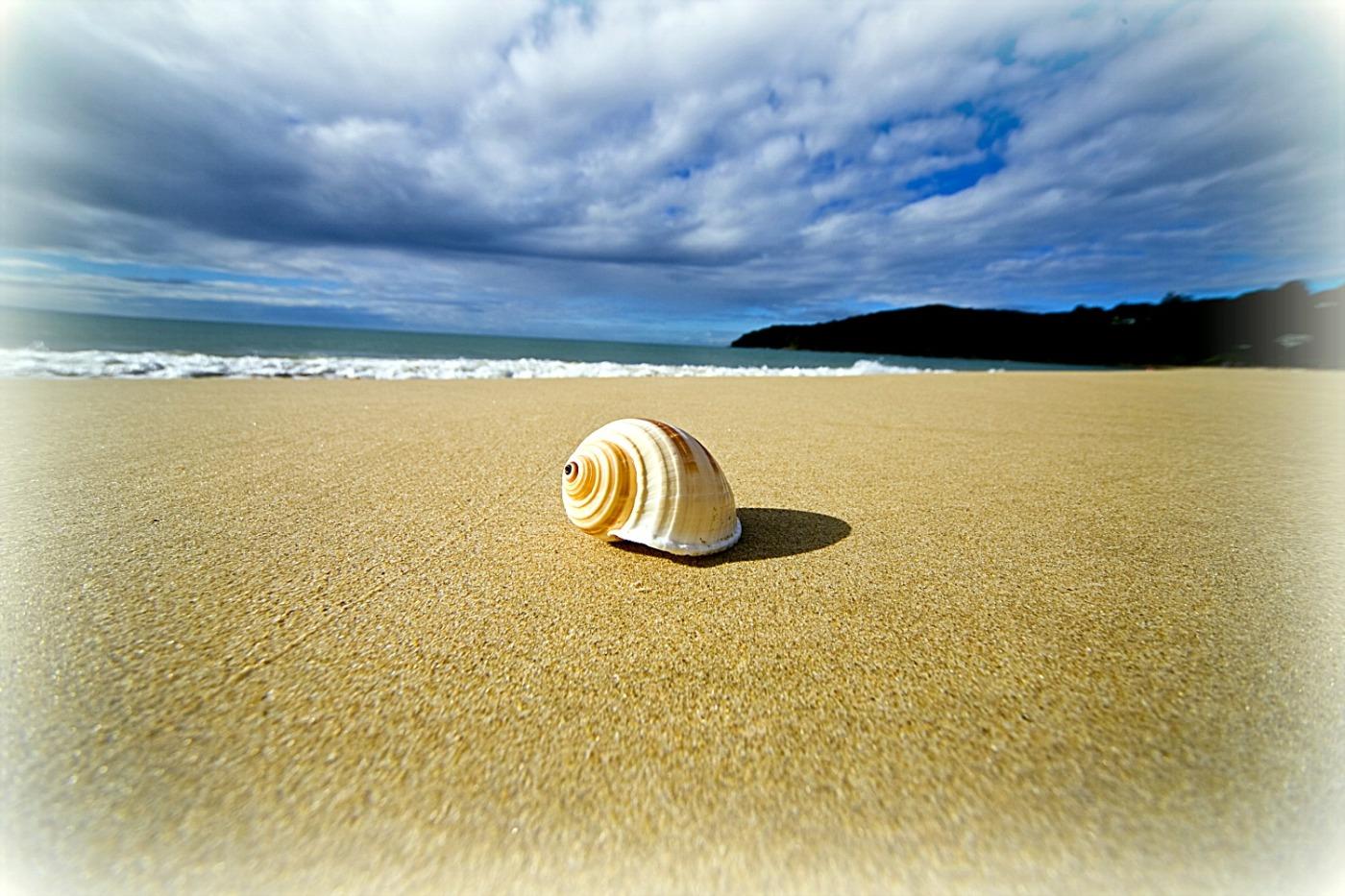 1-spiral-shell-on-beach-queensland-australia