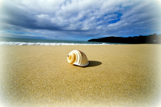 spiral-shell-on-the-beach-queensland-australia