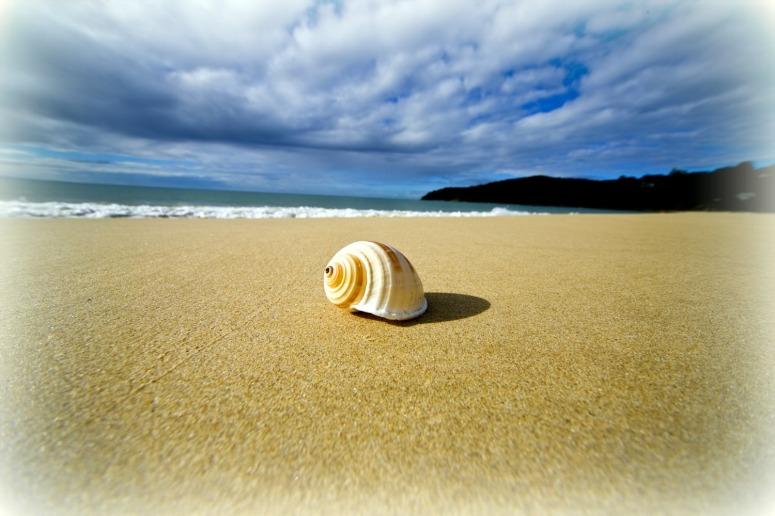 spiral-shell-on-the-beach-queensland-australia