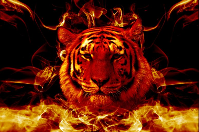 Flaming-Tiger-Wallpaper-HD