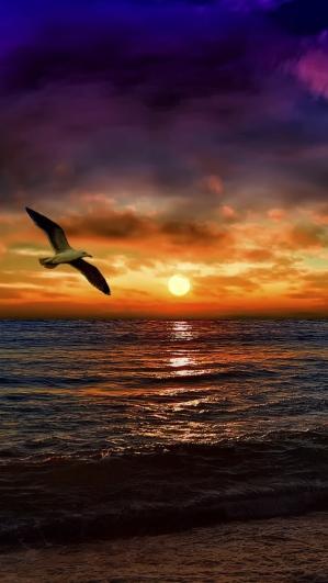 sea_gull_flying_photoshop_paint_beach_95992_1080x1920